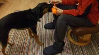 Clicker Training A Bird Dog Retrieve Part 1 Shaping And Chaining The Basic Retrieve (fetch)