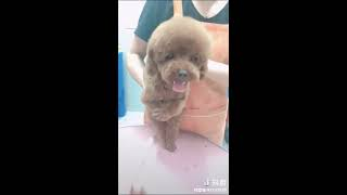 Funny Dog Injection videos -  Dog Injection Funny Compilation