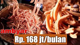 EXCLUSIVE FULL PROCESS - Ide Usaha Sukses STIK UNIKO stik Renyah Gurih Sehari Omset 5 juta (HD 2020)