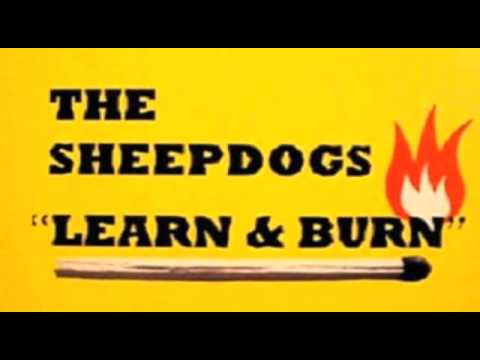 Sheepdogs learn and burn albums