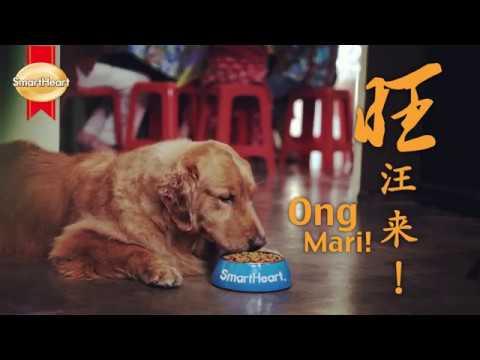 """""""少不了你"""" SmartHeart CNY by PetsterTV 2018"""