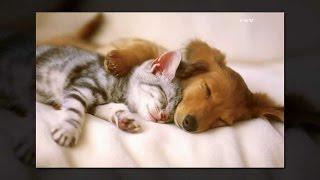 Приколы с животными  Наши милые собачки и кошечки