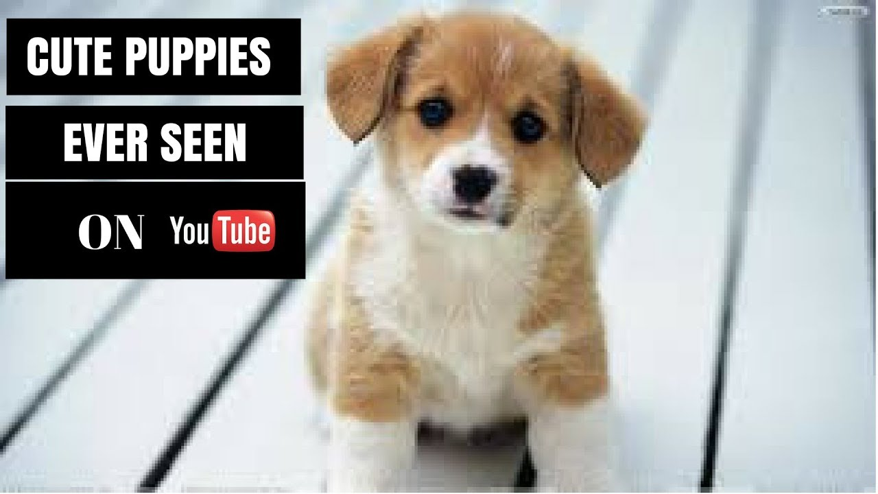 PUPPIES AND BABIES (CUTE PUPPIES EVER SEEN ON YOUTUBE)