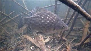Зимняя рыбалка на карася подводная съемка Серия 1