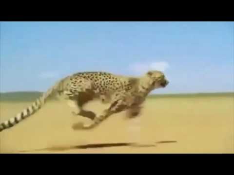Sd Of Jaguar
