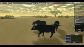 Roblox Migración de Wild Savannah 2nd Buffalo