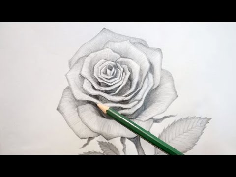 How To Draw An Open Rose Shading Tutorial With Hb H 2h Pencil