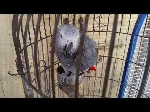Rawalpindi Birds Market Visit Vlog #2 (Prices In Description