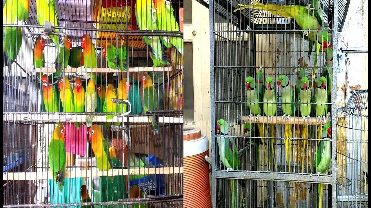 Rawalpindi Birds Market Visit Vlog #2 (Prices In Description)