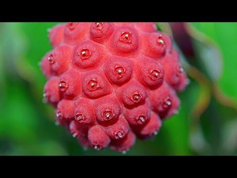Top 10 Berries You've Never Heard Of