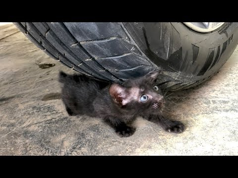 Crushing Crunchy & Soft Things by Car -EXPERIMENTS: CAR VS CAT, CANDY, TOYSL, BOTTLE