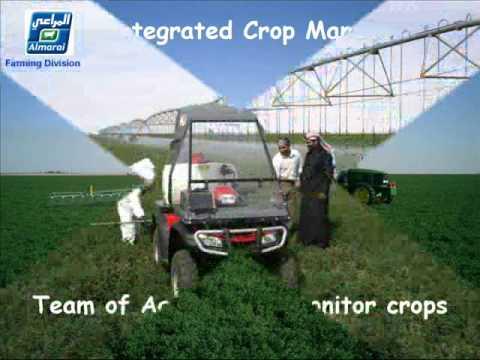 AL MARAI FARMING DIVISION, SAUDI ARABIA