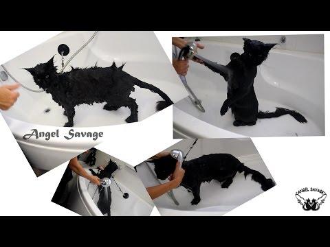 Как часто можно мыть мейн куна