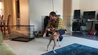 Kennel Training for Benji