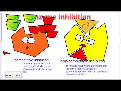 Enzyme Inhibition IB Biology