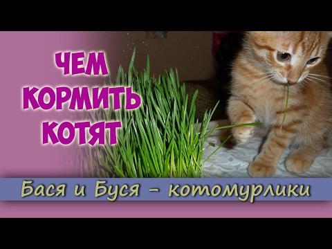 Как кормить 3 месячного котенка