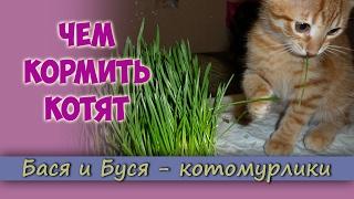 Чем кормить котят? Питание котят. Как кормить правильно?