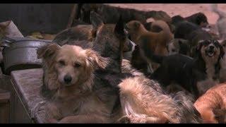 Люди, собаки и догхантеры
