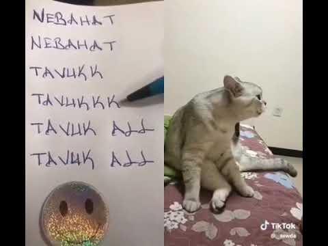 Konuşan Kedi Tom Acıkmış - Talking Tom Türkçe - Tom Kedi Komik Video -konuşan Kediler