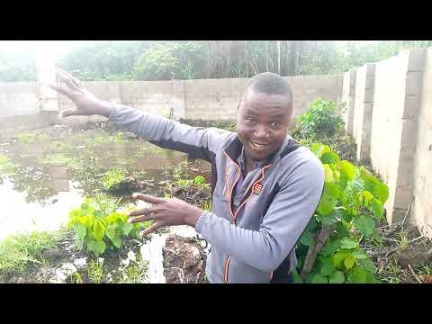 Borehole drilling and Farm Setup - Nigeria   29 Apr 2021