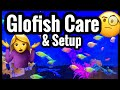 Tetra Glofish Care & Tank Setup Debunked