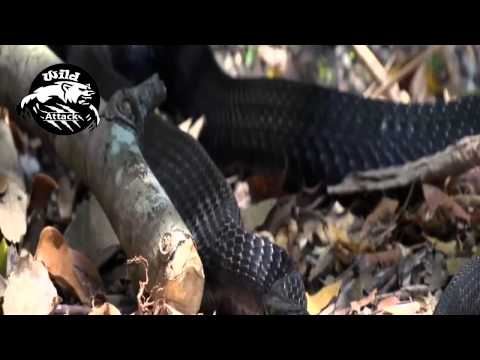 snake attack best compilation HD
