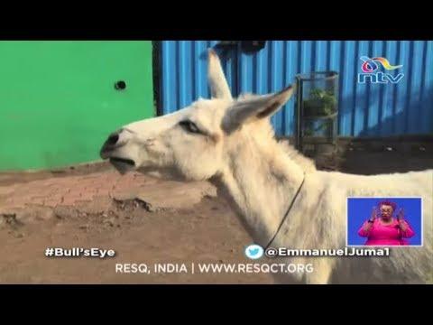 Kimeumana! Ruto's Loyalty Pledge And The Singing Donkey    Bull's Eye