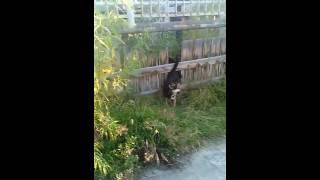 Большой Приколов Секс Собака и Волк