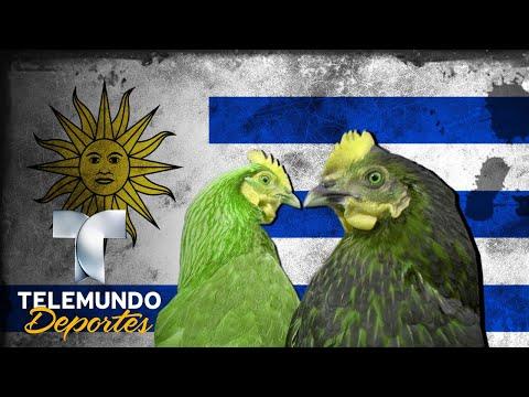 Tremendo lío de gallinas en el fútbol uruguayo | Más Fútbol | Telemundo Deportes