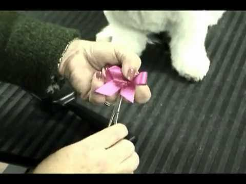 How to place bows that actually stay in with Melissa Verplank