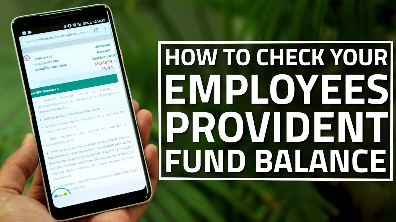 How to Check Your Employees' Provident Fund Balance