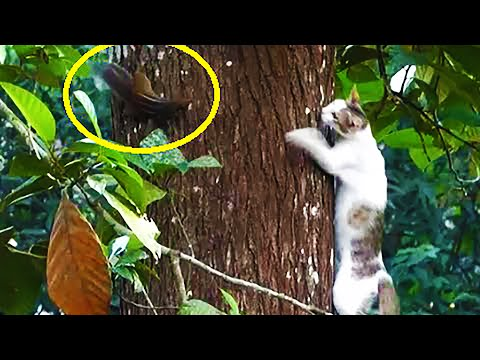 Cat climbs a very big tree to catch  a squirrel !