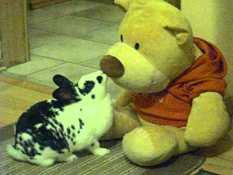 rabbit loves teddy bear youtube