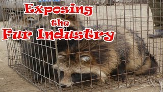 Exposing the Fur Industry (CRUELTY BEHIND FUR CLOTHES)