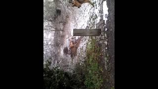 Kangal Cross Collie Vs Siberian Husky Vs German Shepherd, Large Breed Dogs
