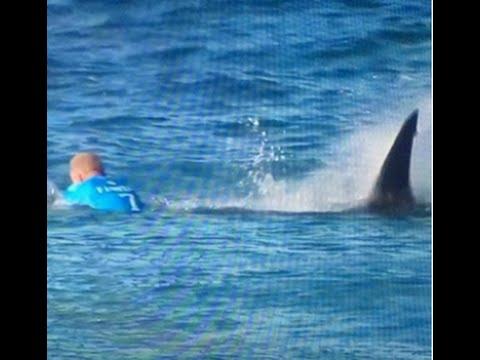 Download Surfista Mick Fanning foi atacado por tubarão na África do Sul - Shark Attack