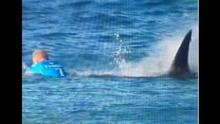 surfista mick fanning foi atacado por tubaro na frica do sul shark attack