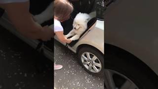 Выгоняют собаку. Очень удобный автогамак для собак