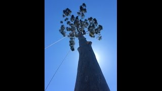Video 30+m Climbing Removal on Rope Runner download MP3, 3GP, MP4, WEBM, AVI, FLV Desember 2017