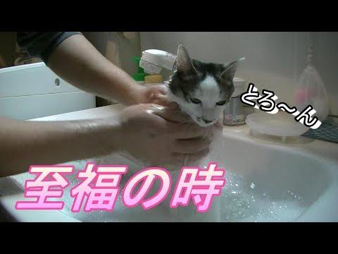 お風呂の時だけ大人しい猫