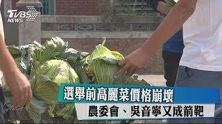 選舉前高麗菜價格崩壞 農委會、吳音寧又成箭靶