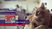 FELIWAY Феромон для кошек феливей - модулятор поведения - YouTube