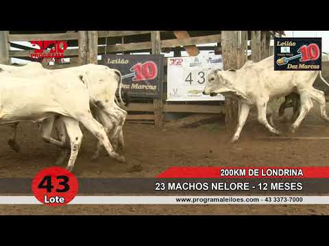 Lote 43