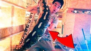 КОГО СЪЕЛ ПИТОН?! Какую змею я бы не стал брать на руки?