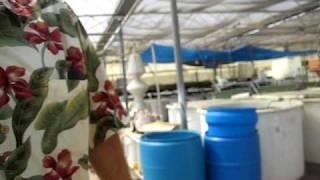 Biofilter materials for Aquaculture