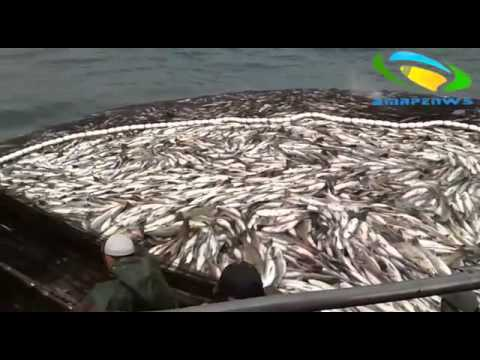 Sahara Fish Plunder Video