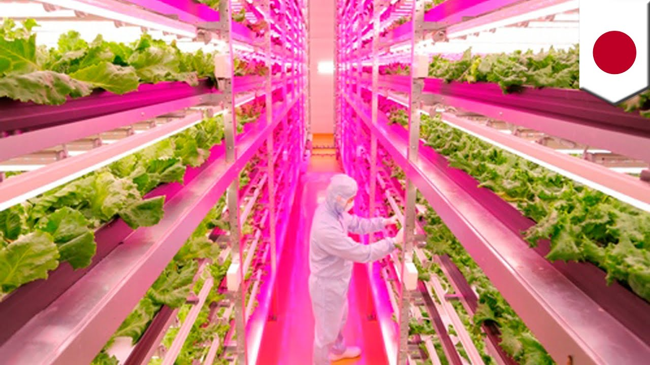 Serre 1 Meter Shigeharu Shimamura Teams Up With Ge To Grow Lettuce