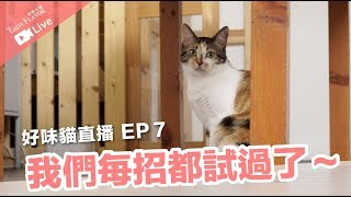所有方法我們都嘗試過啦-米香親訓大哉問-好味貓直播-ep7