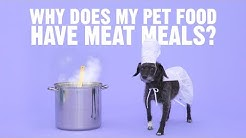 Why Does My Pet Food Have Meat Meals? | Chewy