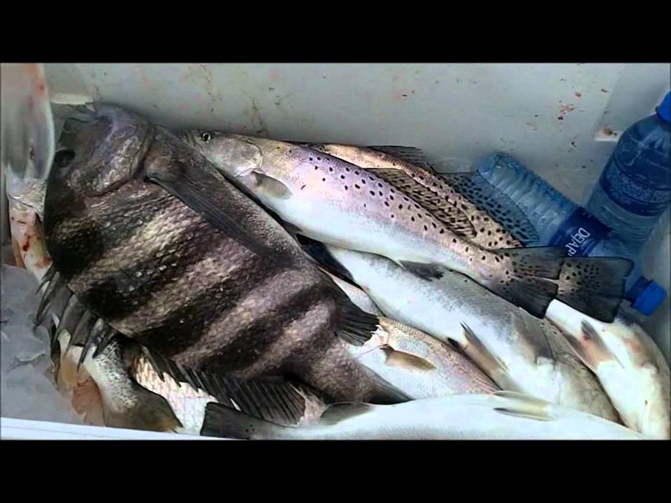 Jacksonville best mayport jetty fishing with capt dave for Fishing report jacksonville fl